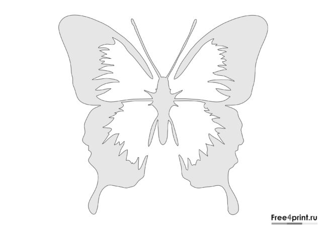 Красивый трафарет бабочки для распечатки